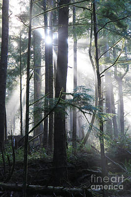 Photograph - Forest Light 4 by Jeanette French