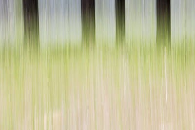 Photograph - Forest Light by Deborah Hughes
