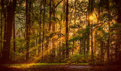 Fall Animals - Forest Light II by David Kay