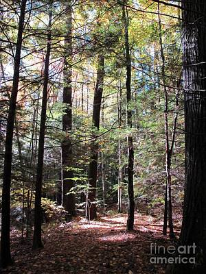 Photograph - Forest Light by Linda Marcille