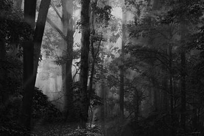 Ron Woods Photograph - Forest Light by Ron Jones