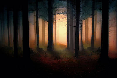 Autumn Scene Digital Art - Forest Light by Shanina Conway