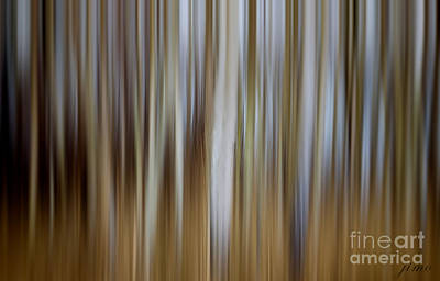 Photograph - Forest Line by Jim Hatch