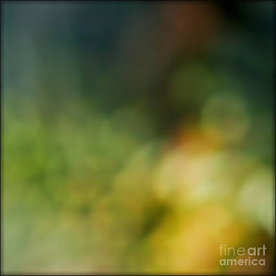 Photograph - Forest by Liz  Alderdice