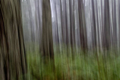Photograph - Forest Madness by Robert Woodward
