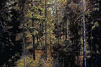 Photograph - Forest by Michele Wright
