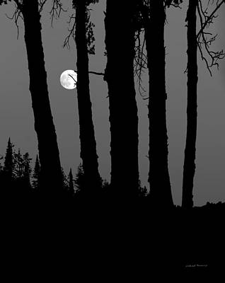 Photograph - Forest Moon by Leland D Howard