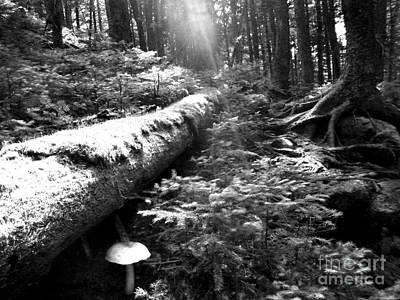 Photograph - Forest Morning Sunbeam by Glenn Gordon