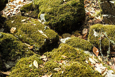 Forest Moss Print by Suzanne Luft