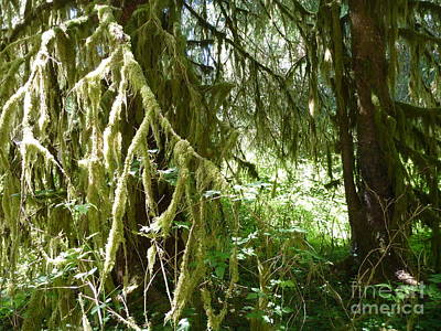 Photograph - Forest Near Pacific Ocean by John Potts