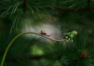 Snail Wall Art - Photograph - Forest Nook by Izis