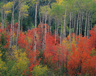 Photograph - Forest Of Color by Leland D Howard