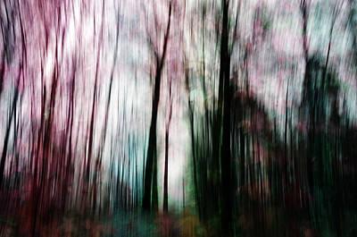 Photograph - Forest Of Imagination by Randi Grace Nilsberg