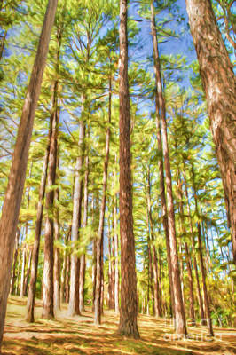 Autumn Peggy Franz Photograph - Forest Of Pine Trees by Peggy Franz