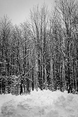 Photograph - Forest Of Snow by Sara Frank