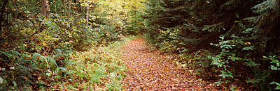 Fallen Leaf Photograph - Forest, Old Forge, Herkimer County, New by Panoramic Images