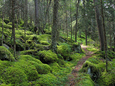 Sterling Photograph - Baxter Creek Trail - Great Smoky Mountains National Park by Georgia Fowler