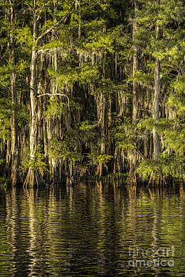 Photograph - Forest On Caddo Lake II by Tamyra Ayles