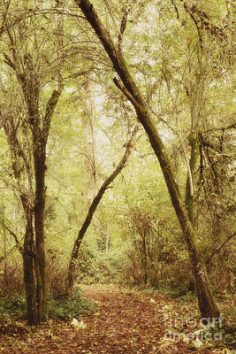 Photograph - Forest Path 1 by Rebecca Cozart