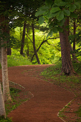 Photograph - Forest Path by Brad Brizek