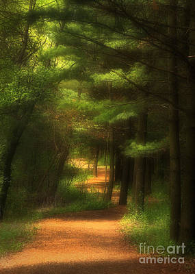 Dappled Light Photograph - Forest Path by Clare VanderVeen