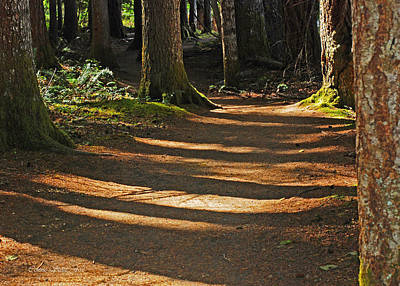 Photograph - Forest Path by Connie Fox