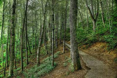 Photograph - Forest Path by Crystal Wightman