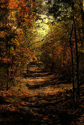 Luminism Photograph - Forest Poetry by Nina Fosdick