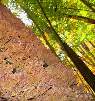 Woodscape Photograph - Forest Polypore by Joshua Bales