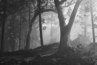 Forest Primeval Original by Hugh Smith