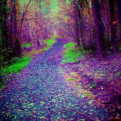 Woodland Photograph - #forest #purple #path #green #woodland by Candy Floss Happy