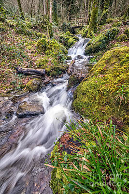 March Digital Art - Forest Rapids by Adrian Evans