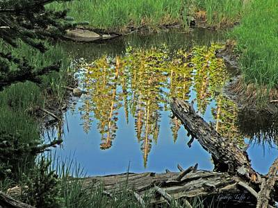 Photograph - Forest Reflected by George Tuffy