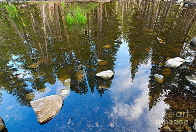 Reflexion Photograph - Forest Reflection by Jamie Pham