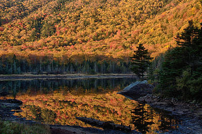 Forest Reflection Art Print by Jeff Folger