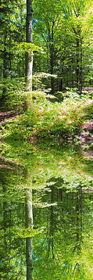 Art Print featuring the photograph Forest Reflections by John Stuart Webbstock