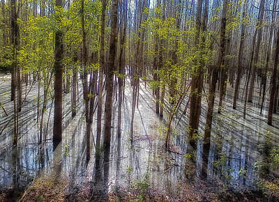 Forest Reflections Art Print by Mountain Dreams