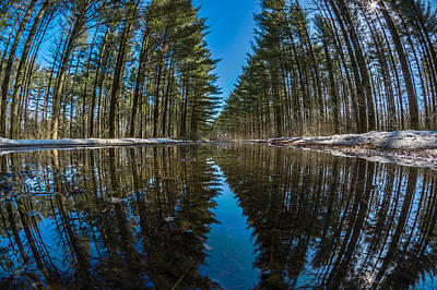 Photograph - Forest Reflections by Randy Scherkenbach
