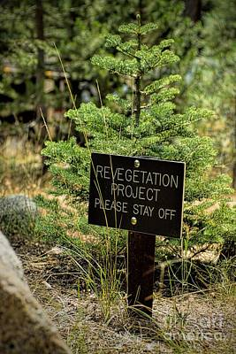 Photograph - Forest Restoration by Peggy Hughes