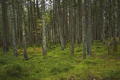 Forest Art Print by Rhys Templar