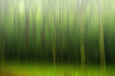 Photograph - Forest by Rima Biswas