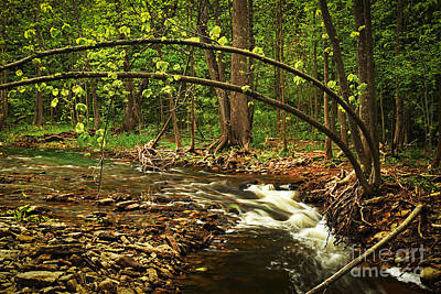 Forest River Art Print