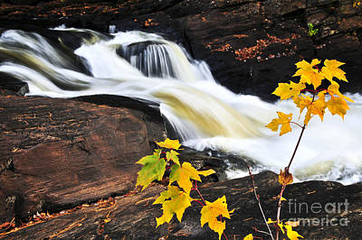 Waterfall Photograph - Forest River In The Fall by Elena Elisseeva