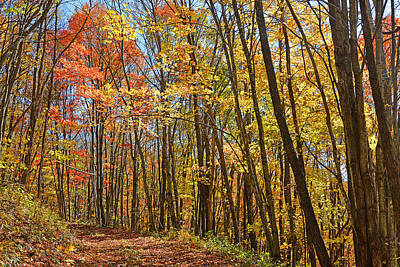 Photograph - Forest Road Curve Of Color by Alan Lenk