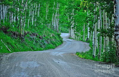 Photograph - Forest Road by Kelly Black