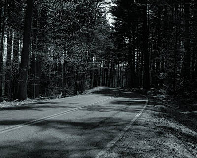 Photograph - Forest Road by Haren Images- Kriss Haren