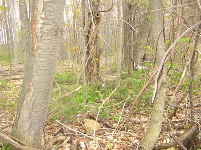 Photograph - Forest Scene - Digital Painting Effect by Rhonda Barrett