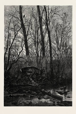 Forest Scene In Spring Print by English School