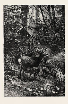 Forest Scene In Summer Print by English School