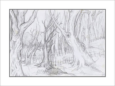 Drawing - Forest Scene by Ruth Renshaw